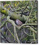 Sparrow Bird Perched . 40d12307 Canvas Print