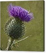 Spear Thistle With Texture Canvas Print