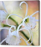 Spider Lily 3 Canvas Print