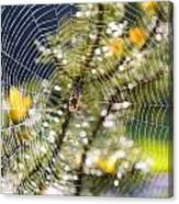 Spider On Web Canvas Print