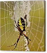 Spider Power Canvas Print
