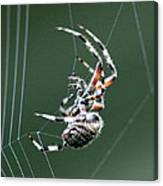 Spider - The Spinner Canvas Print