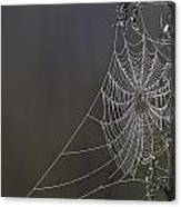 Spider Web Covered In Dew Drops Canvas Print
