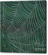 Spider Web With Dew Drops Canvas Print