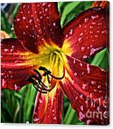 Spiderman The Day Lily Canvas Print