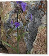 Spiderwort Canvas Print