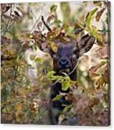 Spike Elk In Brush Canvas Print