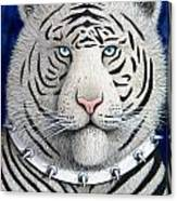 Spike The Tiger Canvas Print
