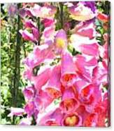 Spikes Of Pink Foxgloves Canvas Print