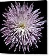 Spiky Flower Canvas Print
