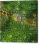 Spiny Desert Rhinoceros Chameleon Canvas Print