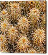 Spiny Prickly Sharp Canvas Print