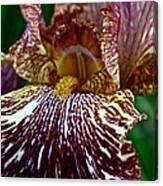 Splashed Iris Canvas Print