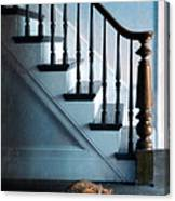 Spooked Cat By Stairs Canvas Print
