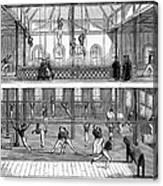 Sports: Gymnastics, 1859 Canvas Print