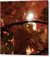 Spotlight On Fall Canvas Print