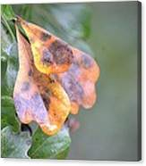 Spotted Oak Leaves In Autumn Canvas Print