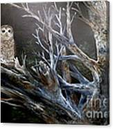 Spotted Owl In Tree Canvas Print