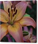 Spotty Lily Canvas Print
