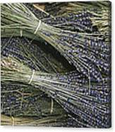 Sprigs Of Lavender, Provence Region Canvas Print