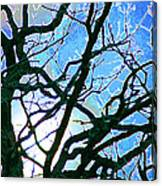 Spring Approaches Canvas Print