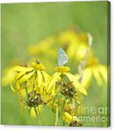 Spring Azure And Friend Canvas Print