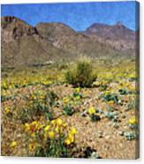 Spring Bloom Franklin Mountains Canvas Print