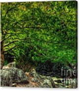 Spring Canopy Canvas Print