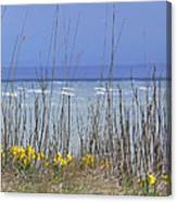 Spring Comes To The Cape Canvas Print