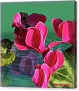 Spring Cyclamen Canvas Print