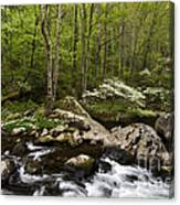 Spring Dogwoods On The Little River - D003829 Canvas Print