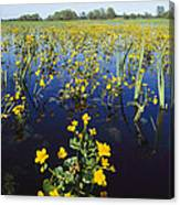 Spring Flood Plains With Wildflowers Canvas Print