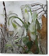Spring Flowers In Ice Storm Canvas Print
