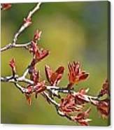 Spring Leaves Greeting Card Blank Canvas Print