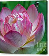 Spring Lotus-08 Canvas Print