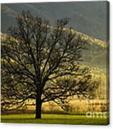 Spring Morning In Cades Cove - D003803a Canvas Print