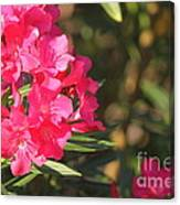 Spring On Oleander Canvas Print