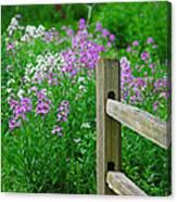 Spring Phlox 6074 Canvas Print