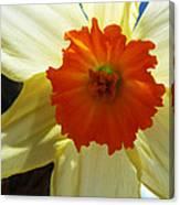 Spring Shines Brightly Canvas Print