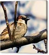 Spring Sparrow Set 1 Canvas Print
