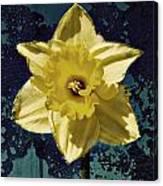 Spring Stones Canvas Print