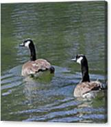 Spring Thaw Water Geese Canvas Print