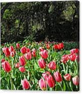 Spring Tulips 1 Vertical Canvas Print