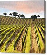 Spring Vineyard Canvas Print