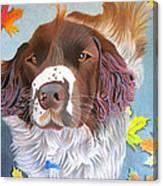 Springer Spaniel Mix - Fredo Canvas Print