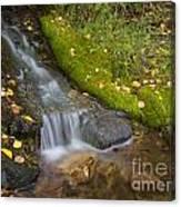 Sprinkle Of Autumn Canvas Print