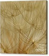 Spun Gold Canvas Print