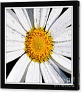 Square Daisy - Close Up 2 Canvas Print