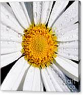 Square Daisy - Close Up Canvas Print