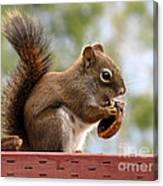 Squirrel And His Walnut Canvas Print